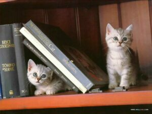 Kittens and Books! @ Tubby & Coo's